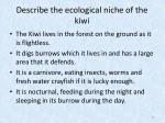 describe the ecological niche of the kiwi