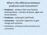 what is the difference between p roducers and consumers
