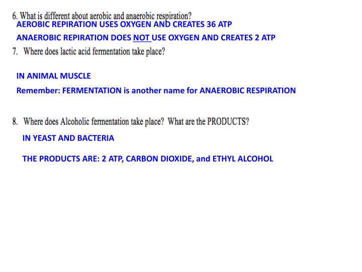 AEROBIC REPIRATION USES OXYGEN AND CREATES 36 ATP
