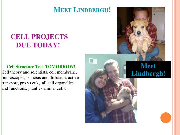 Meet Lindbergh!