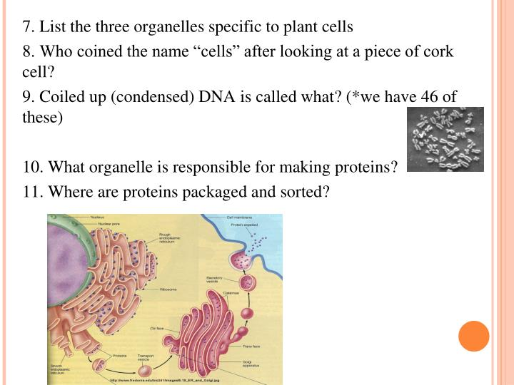 7. List the three organelles specific to plant cells