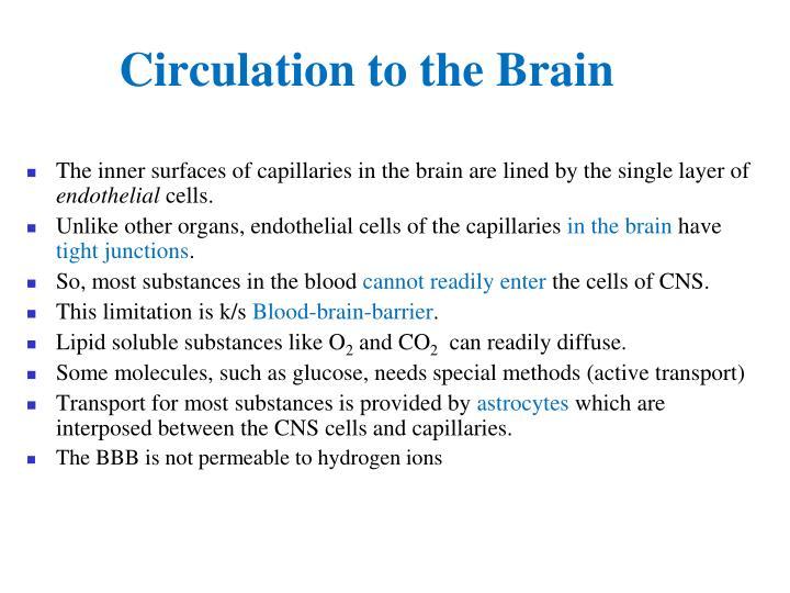 Circulation to the Brain