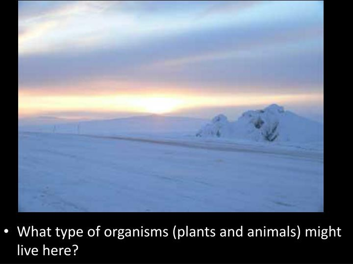 What type of organisms (plants and animals) might live here?