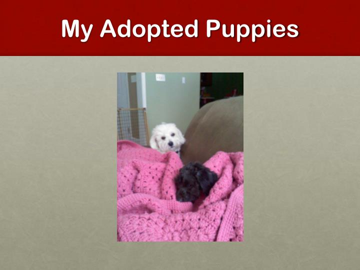 My Adopted Puppies