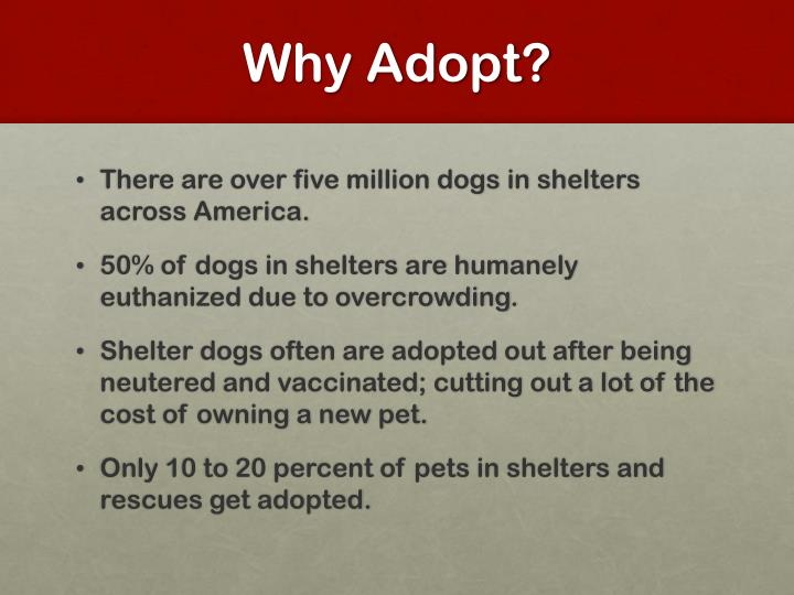Why adopt