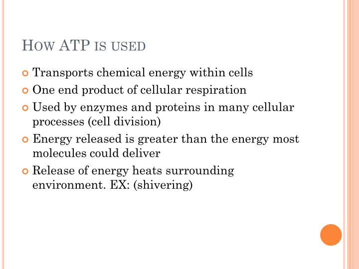 How ATP is used