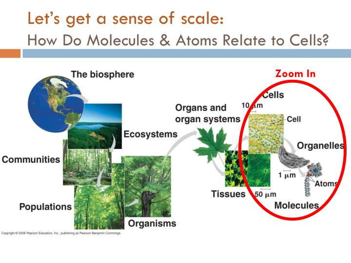 Let's get a sense of scale: