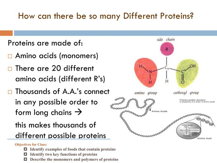 How can there be so many Different Proteins?