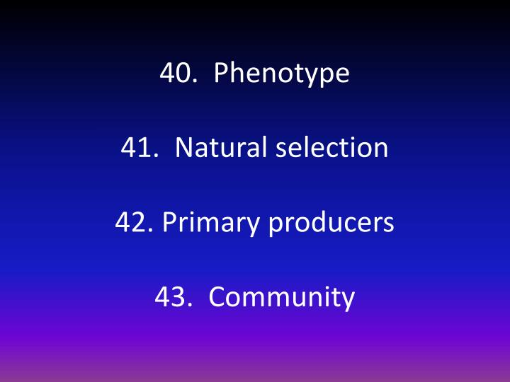 40.  Phenotype