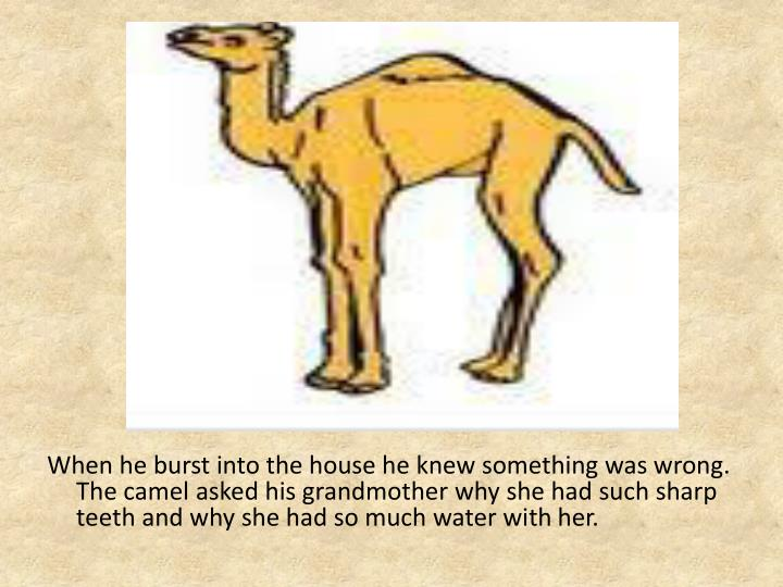 When he burst into the house he knew something was wrong.   The camel asked his grandmother why she had such sharp teeth and why she had so much water with