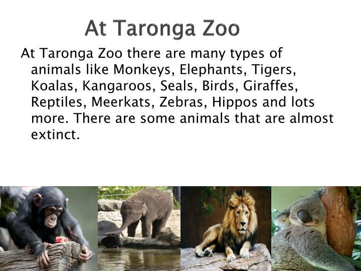At Taronga Zoo