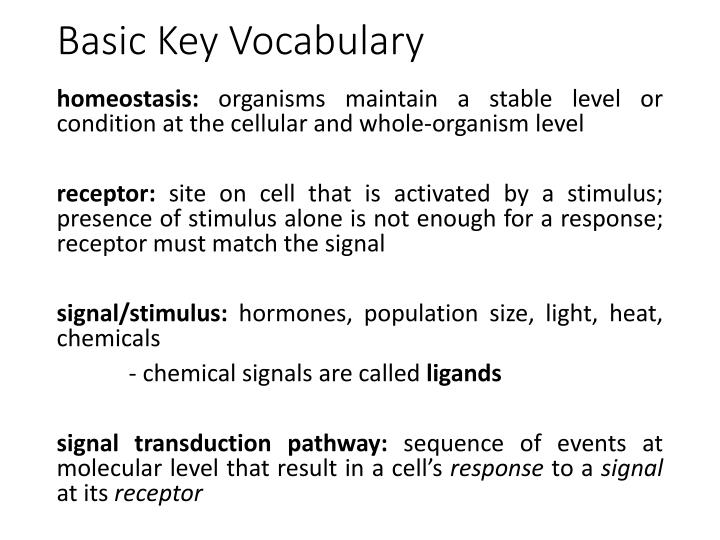 Basic key vocabulary
