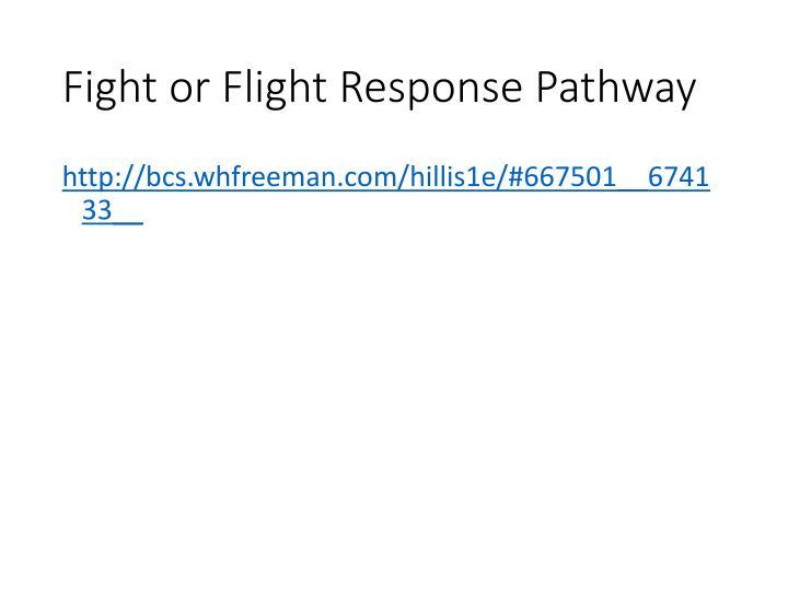 Fight or Flight Response Pathway