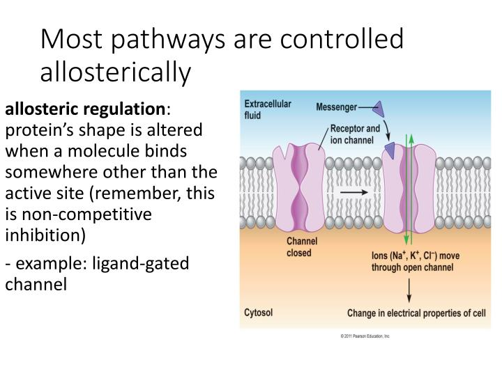 Most pathways are controlled