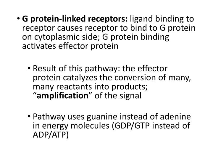 G protein-linked receptors: