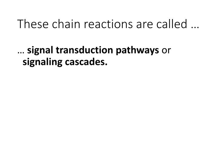 These chain reactions are called …