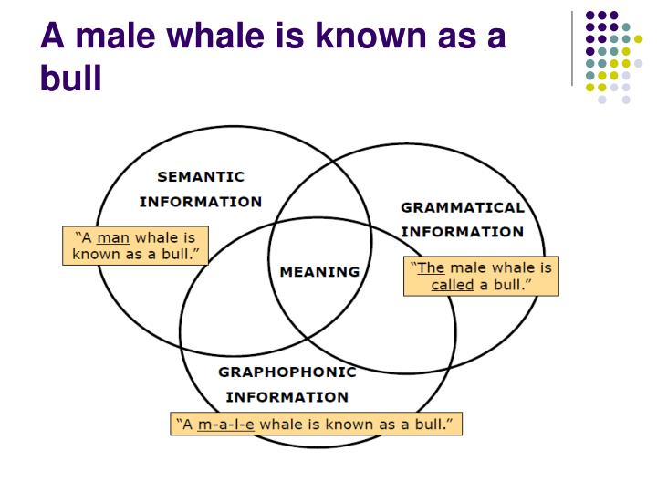A male whale is known as a bull