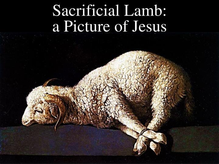 Sacrificial Lamb: