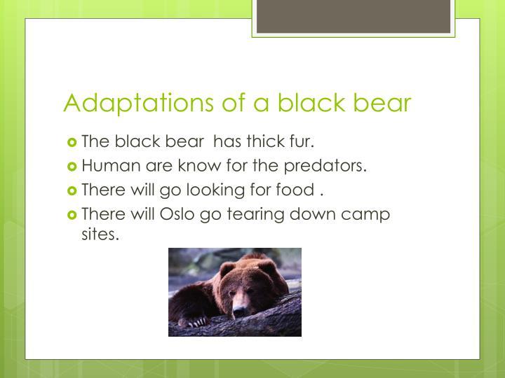 Adaptations of a black bear