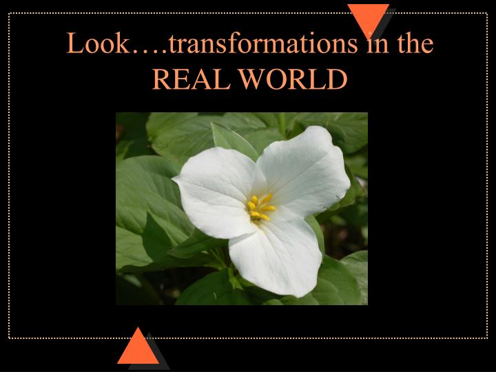 Look….transformations in the REAL WORLD