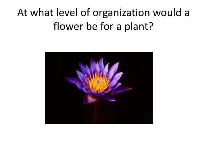 At what level of organization would a flower be for a plant?