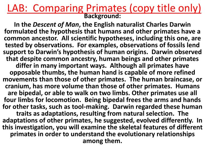 Lab comparing primates copy title only