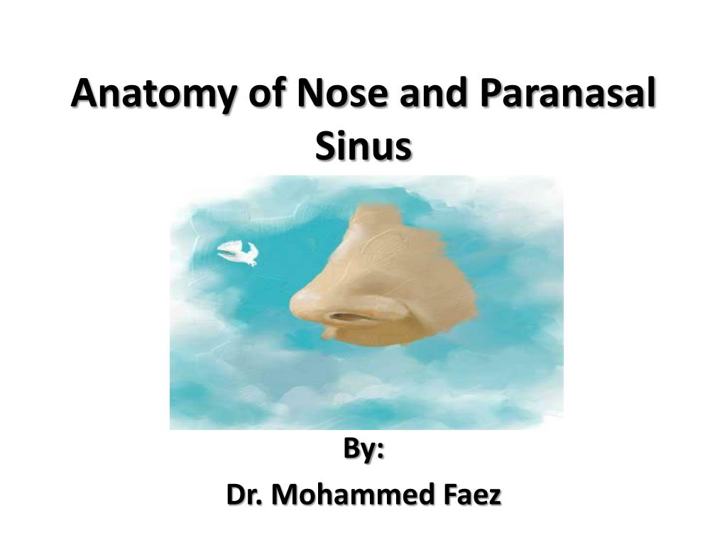 Ppt Anatomy Of Nose And Paranasal Sinus Powerpoint Presentation