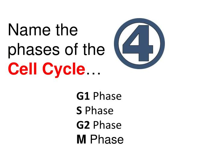 Name the               phases