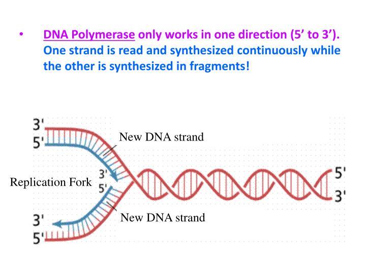 New DNA strand