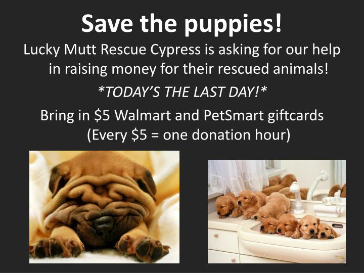 Save the puppies!