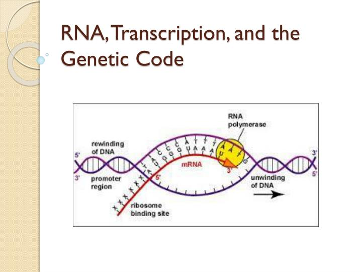 Rna transcription and the genetic code
