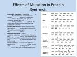 effects of mutation in protein synthesis