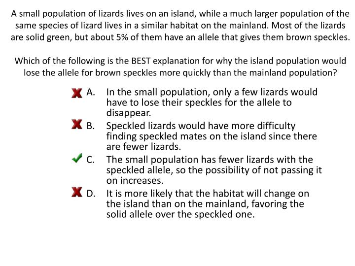 A small population of lizards lives on an island, while a much larger population of the same species of lizard lives in a similar habitat on the mainland. Most of the lizards are solid green, but about 5% of them have an allele that gives them brown speckles.