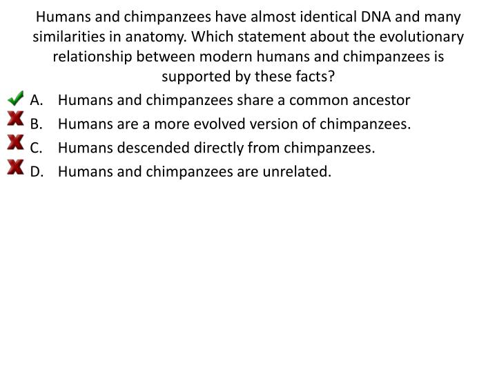 Humans and chimpanzees have almost identical DNA and many similarities in anatomy. Which statement about the evolutionary relationship between modern humans and chimpanzees is supported by these facts?