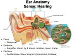 ear anatomy sense hearing