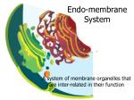 endo membrane system