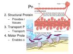 proteins1