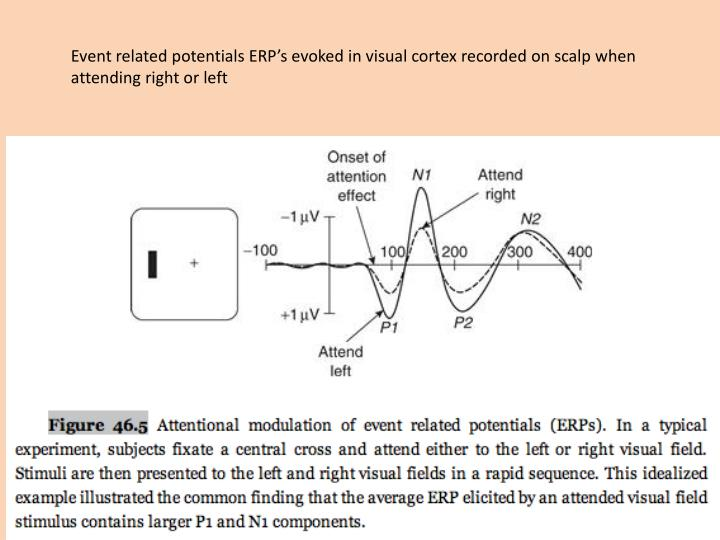 Event related potentials ERP's evoked