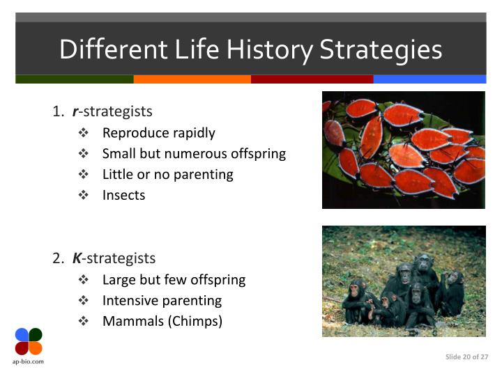 Different Life History Strategies