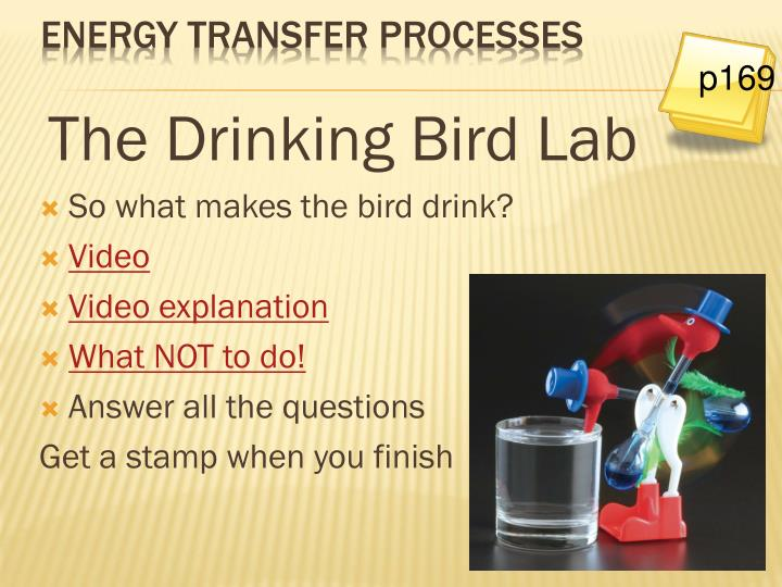 The Drinking Bird Lab