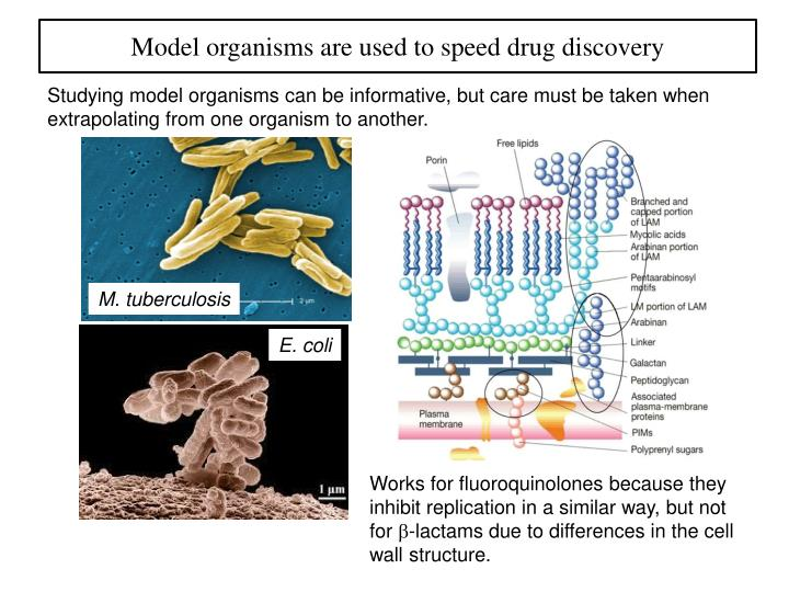 Model organisms are used to speed drug discovery