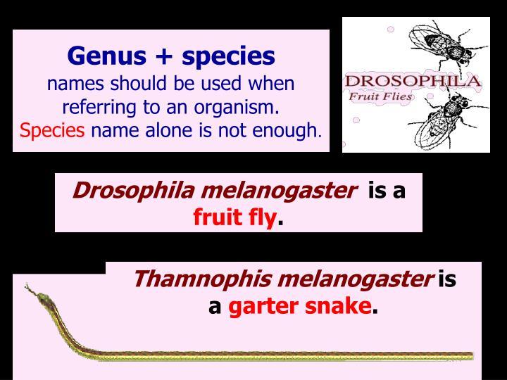 Genus + species