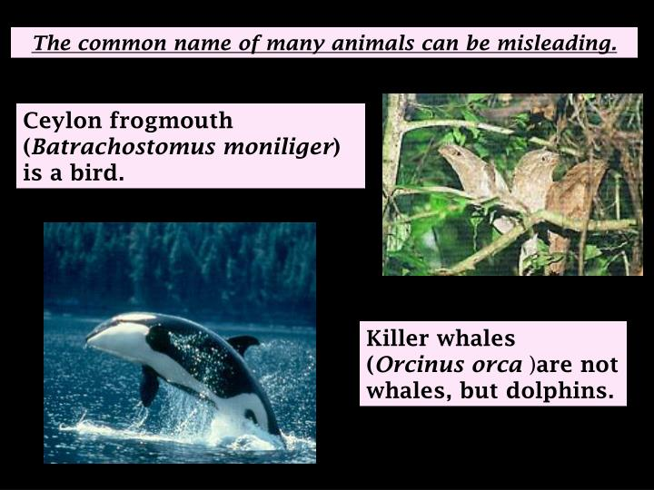 The common name of many animals can be misleading.