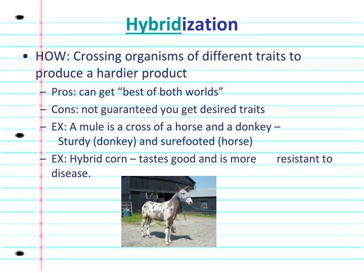 Hybrid ization