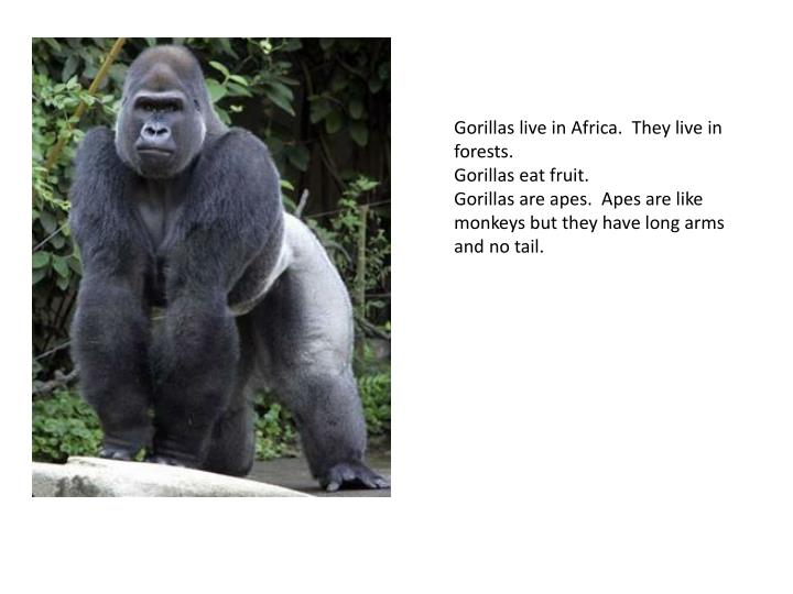 Gorillas live in Africa. They live in forests.