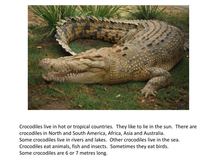 Crocodiles live in hot or tropical countries. They like to lie in the sun. There are crocodiles in North and South America, Africa, Asia and Australia.