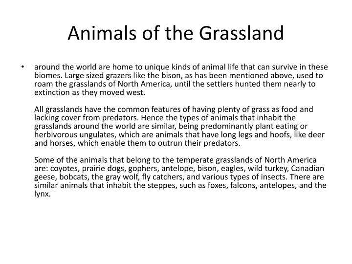 Animals of the Grassland