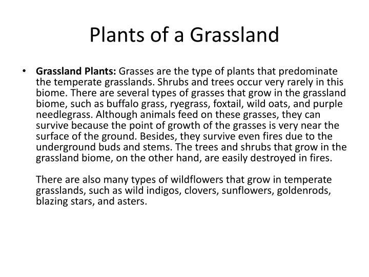 Plants of a grassland