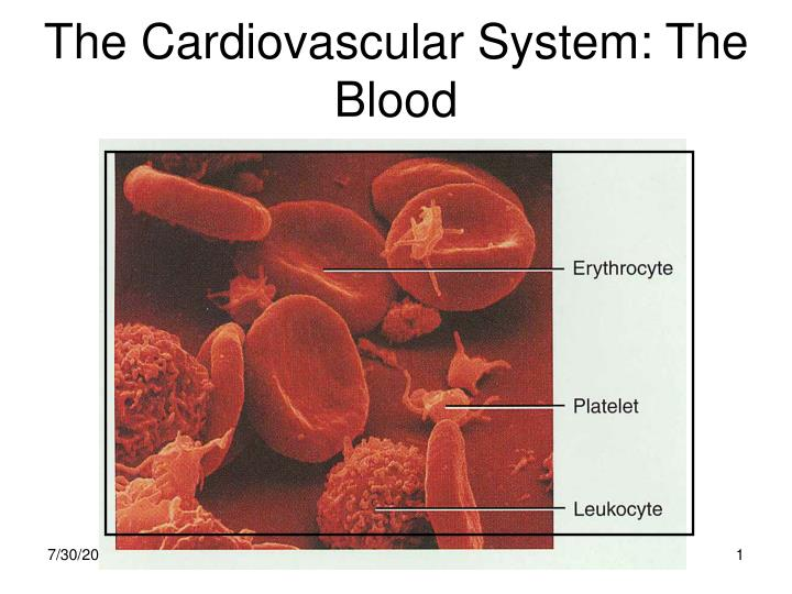 The cardiovascular system the blood