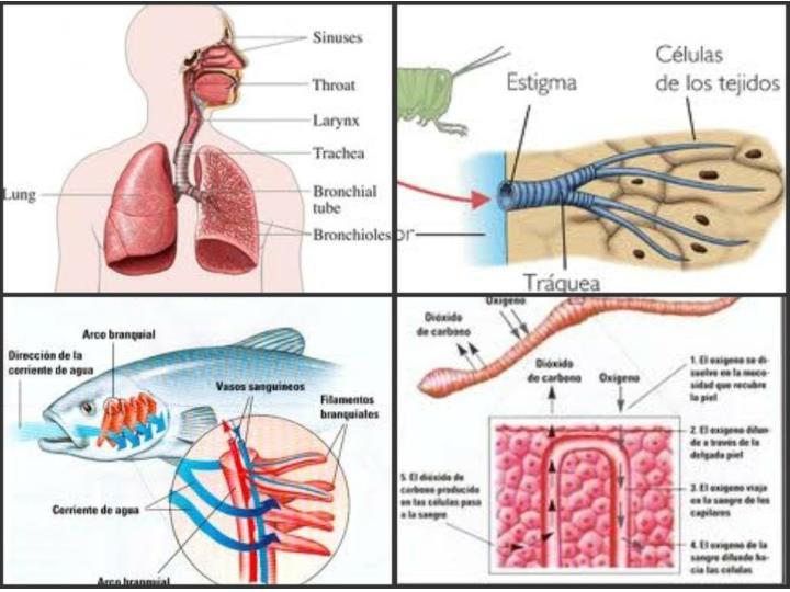 http://3.bp.blogspot.com/-n7iYtBMCt2U/TcnpjS2Lu2I/AAAAAAAAABk/41ka66rjlTs/s1600/tipos+de+respiraciones.jpg